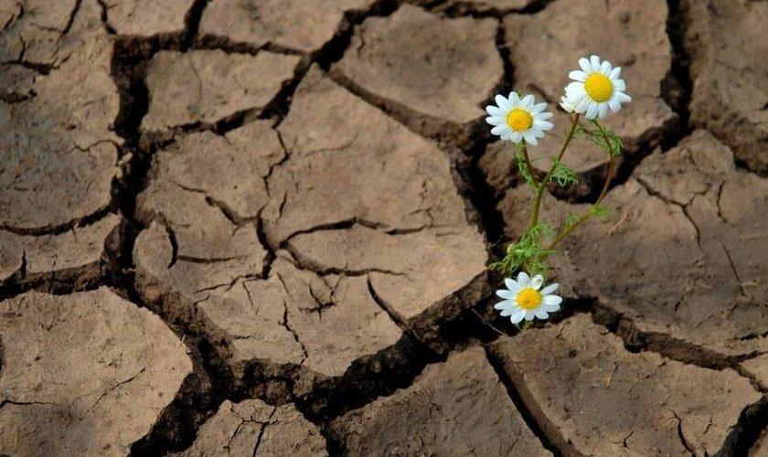 1593484383-flor-na-terra-seca1